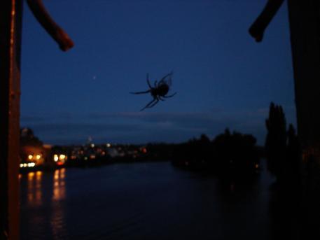písnička pro pavouky