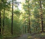 Podzimní déšť v Milíčovském lese